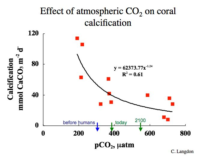 graph of the Effect of atmospheric CO@ on coral calcification