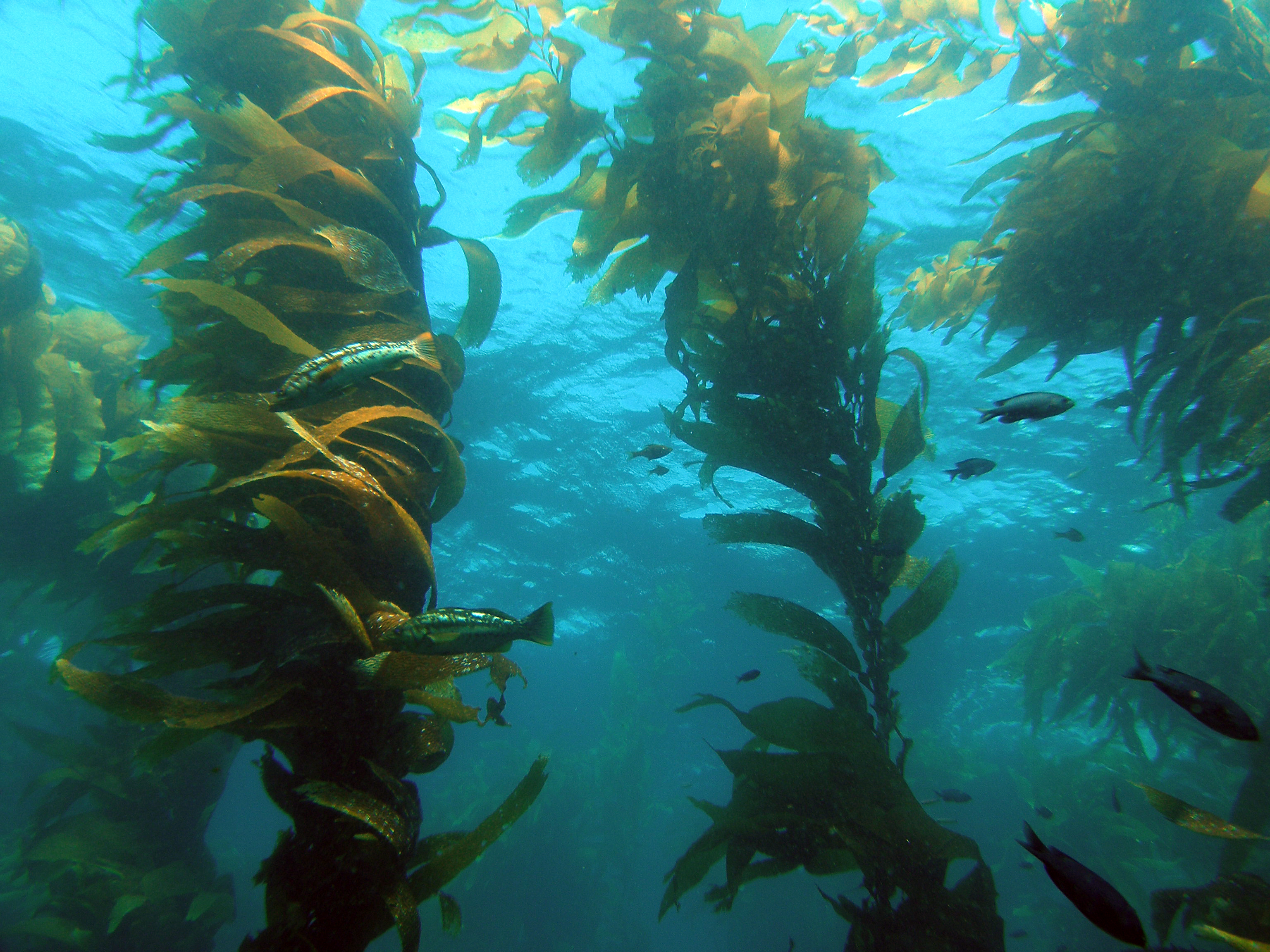 figure_1_5_Kelp_Forest_12.jpg